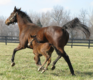 mare and foal galloping